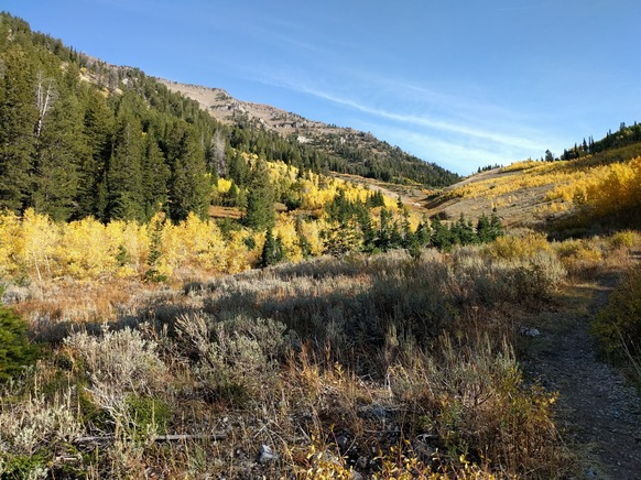 Looking up the trail. The colors on the Aspen turned the valley into a sea of gold.