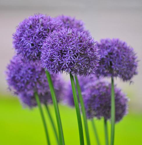 best flowers ever., Beautiful flower